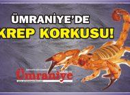 ÜMRANİYE'DE AKREP KORKUSU!